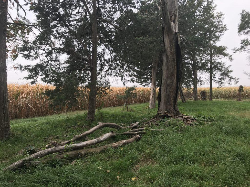 Logs sit under a dead elm tree in the back pasture.