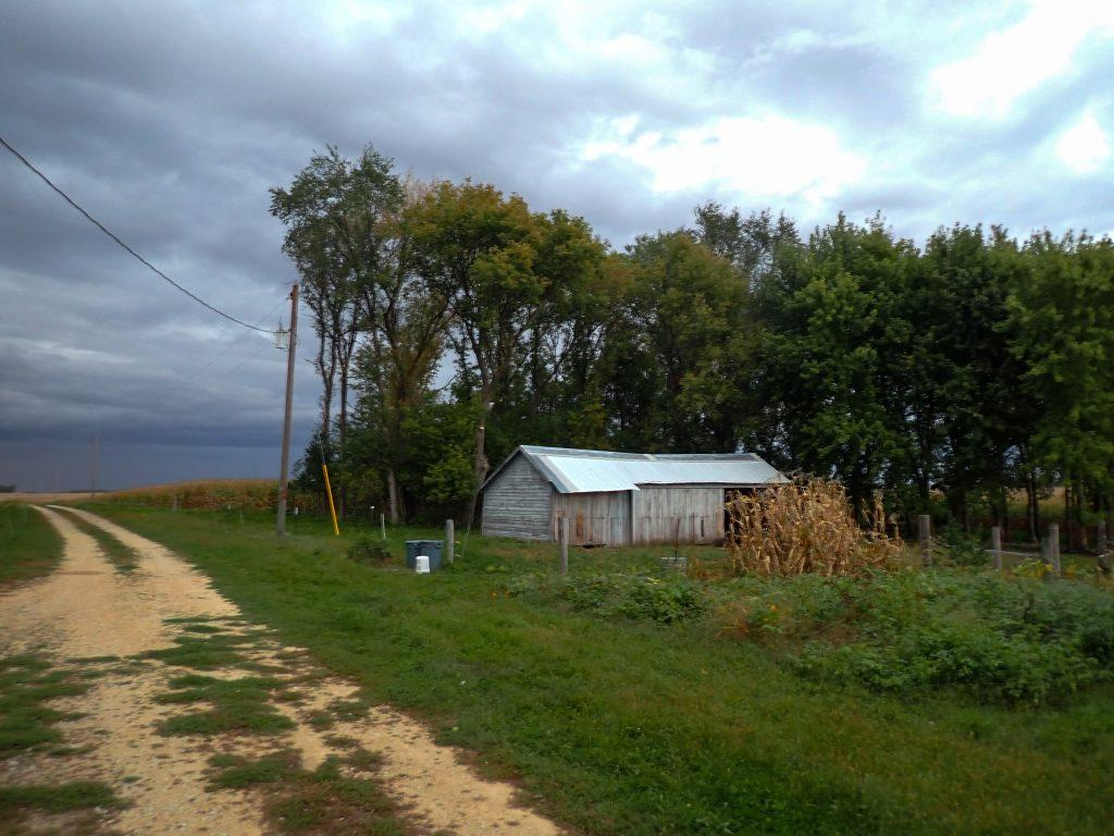 Lean-to shed, corn stalks in the garden, cloudy skies above.