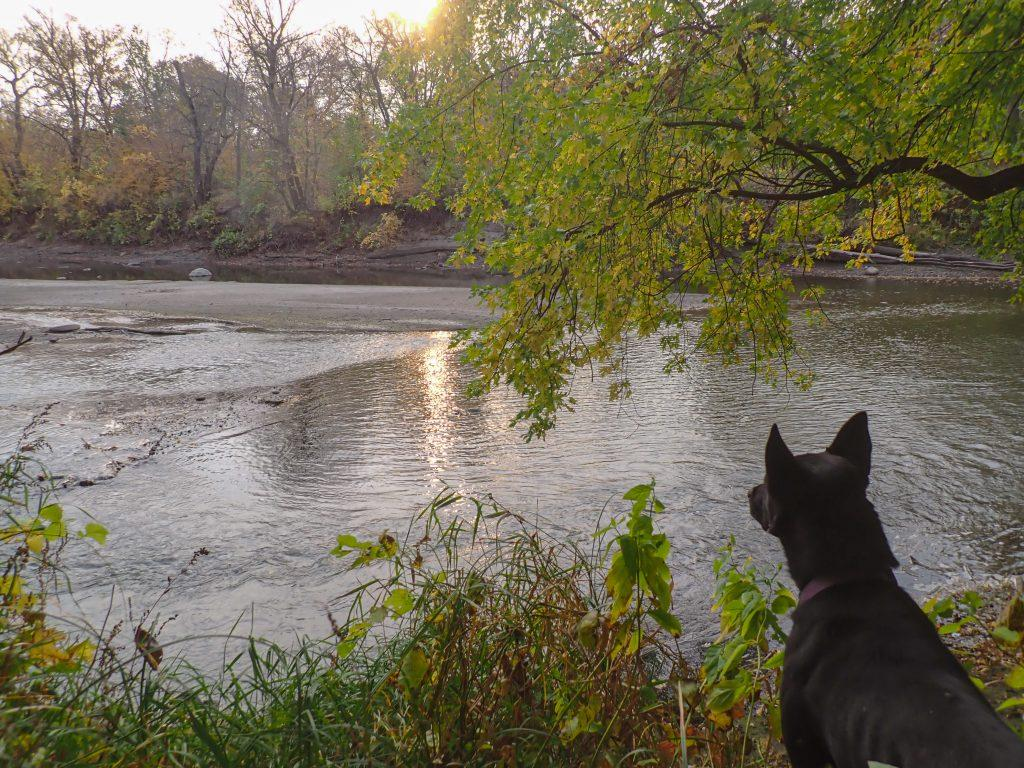 Luna sits looking over the water while the sun rises.