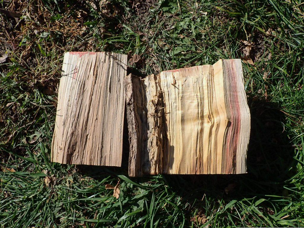 Two pieces of wood laying next to each other, one elm and one boxelder.
