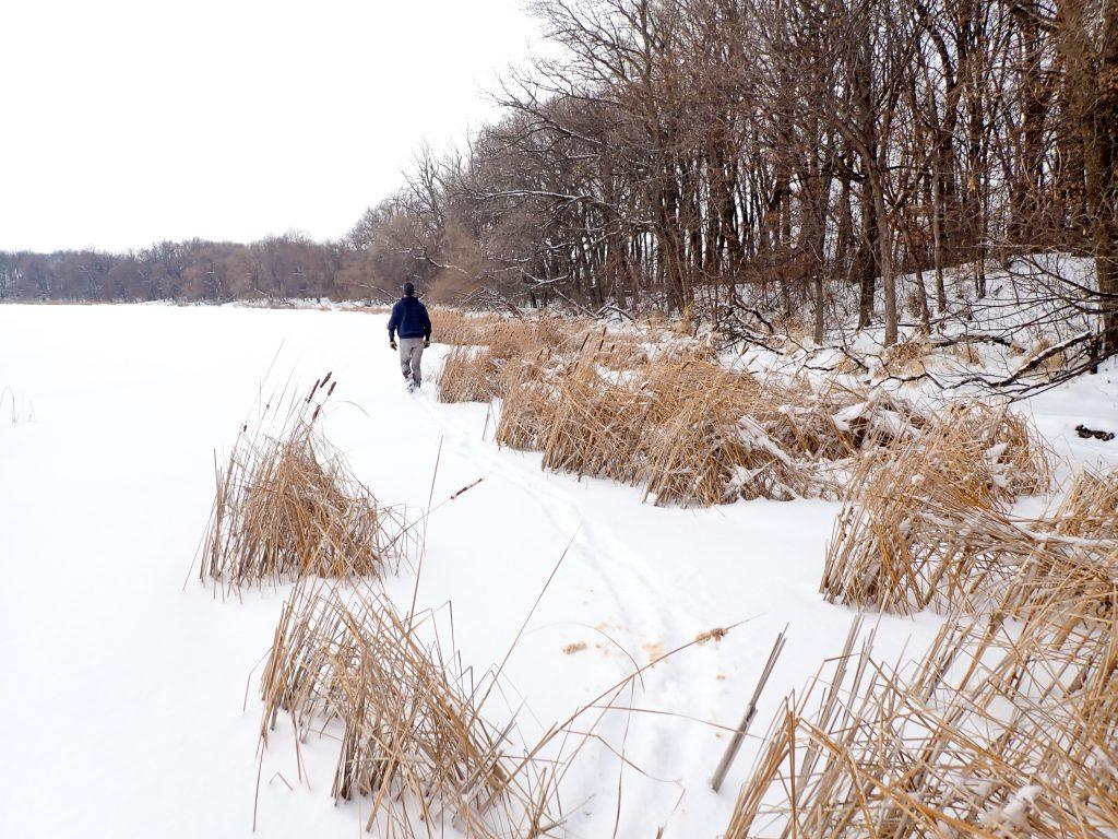 Nick walks on the perimeter of the frozen lake. Trees along the shore line and reeds in our path.