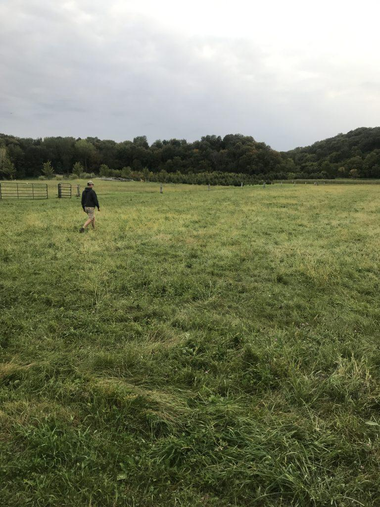 Nick walks through our grass pasture. Picture is full of green grass with green trees in the distant background.