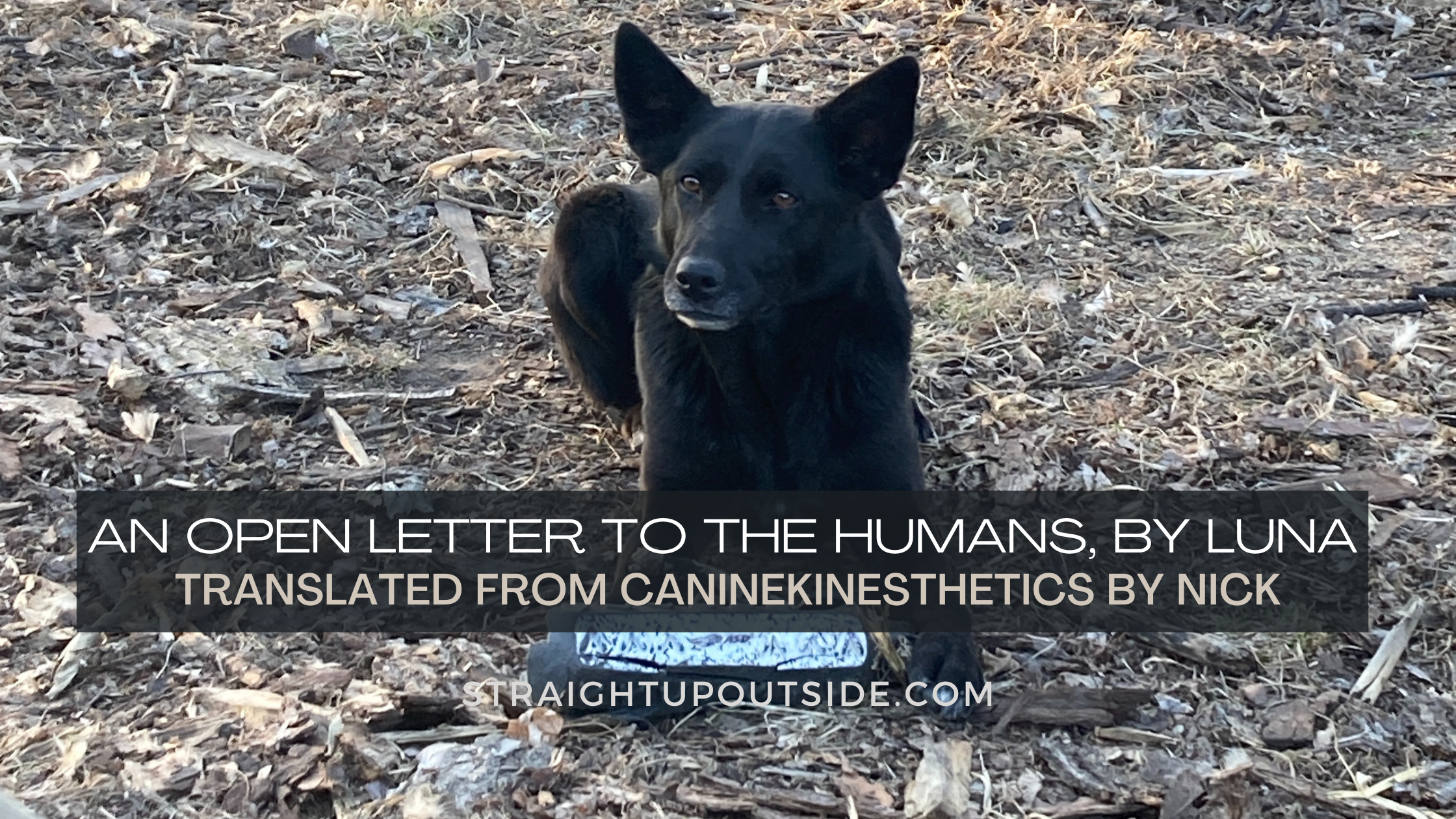Open Letter to the Humans