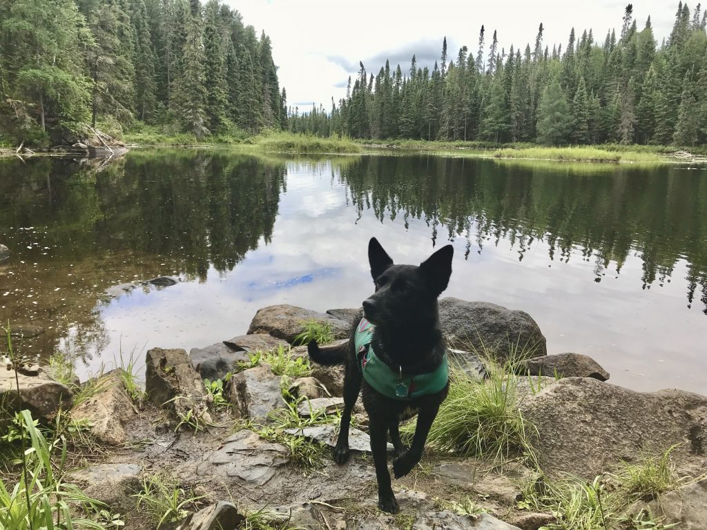 Luna stands by a lake in the Boundary Waters.