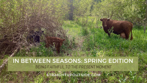 Read more about the article In Between Seasons: Spring Edition