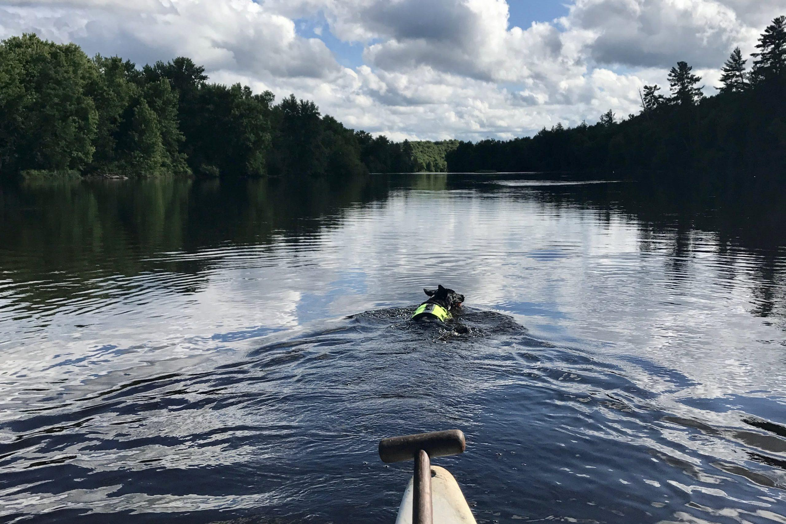 Luna paddles in river ahead of canoe. Cloudy blue skies above.