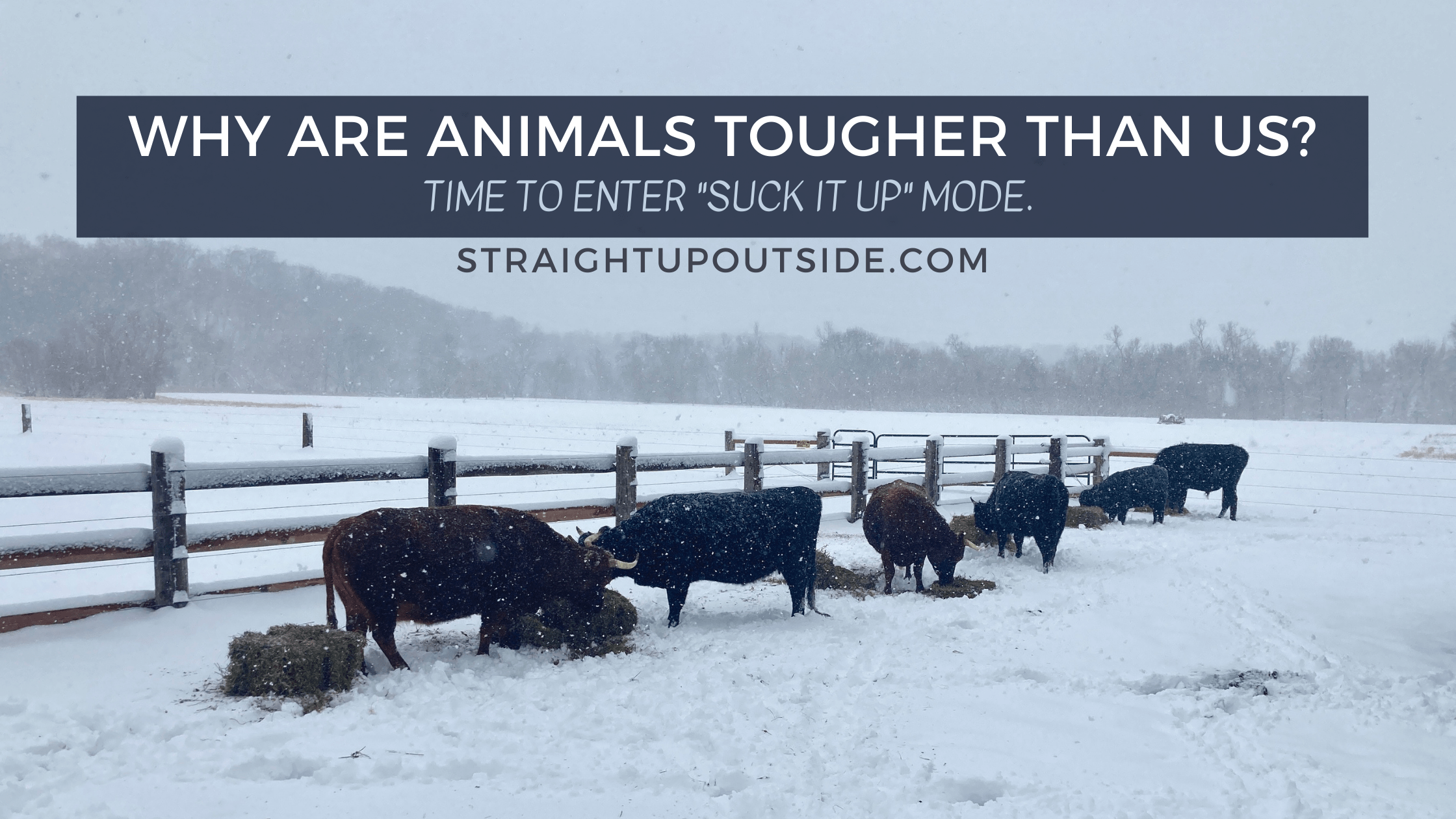 Why Are Animals Tougher Than Us?