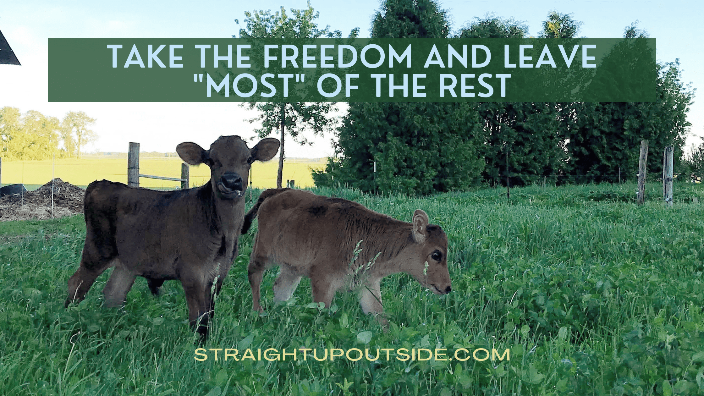 "Take the Freedom & Leave ""Most"" of the Rest"