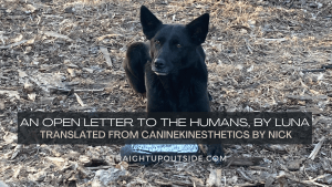 An Open Letter to the Humans