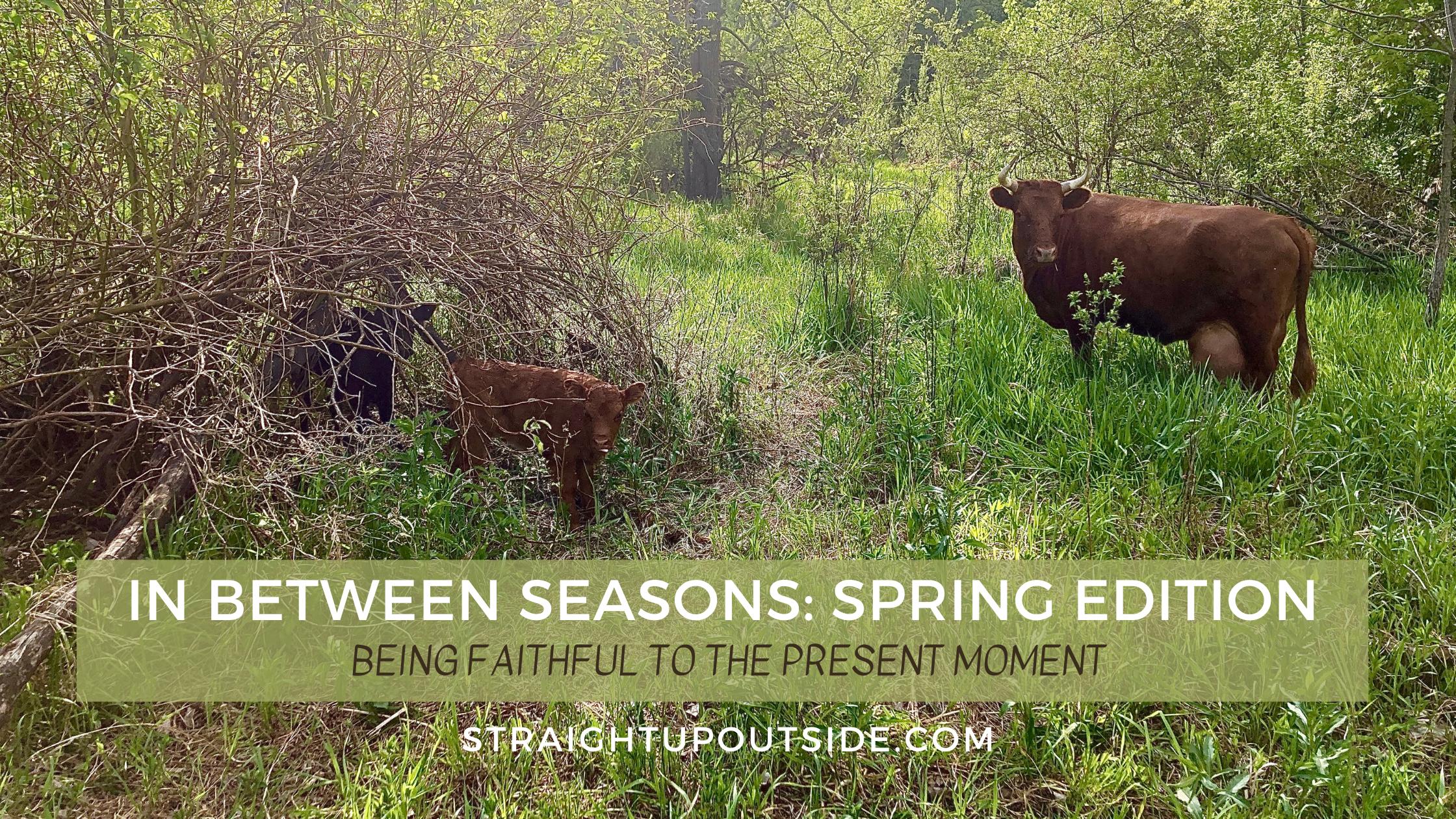 In Between Seasons: Spring Edition